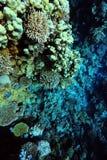 Niederlassungen der Koralle Lizenzfreie Stockfotos