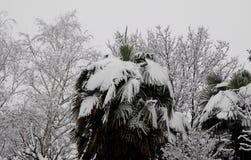 Niederlassungen der Palme und anderen Bäume ricpoprti schneien Stockfotografie