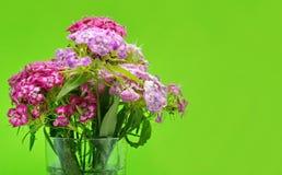 Niederlassungen der schönen rosa und roten Gartennelke auf grünem Hintergrund lizenzfreies stockfoto