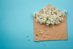 Niederlassungen der weißen Flieder im Umschlag auf einem blauen Hintergrund minimalismus lizenzfreies stockbild