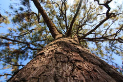 Niederlassungen des Baums Lizenzfreie Stockbilder