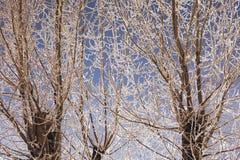 Niederlassungen des Baums im Reif Lizenzfreie Stockfotos