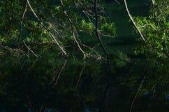 Niederlassungen des Baums lehnen sich, um Teichoberflächenreflexionen im Wasser zu berühren Lizenzfreie Stockfotos