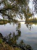 Niederlassungen des Baums werden im Fluss reflektiert Stockfoto