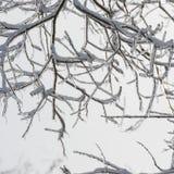 Niederlassungen des Baums werden mit Eis umfasst Stunden und Landschaft Bäume Stockfotografie