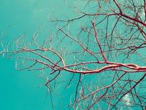 Niederlassungen des trockenen Holzes mit Himmelraum in der Weinlesefarbart Lizenzfreie Stockfotografie