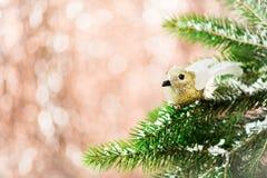 Niederlassungen des Weihnachtsbaums mit Robin Bird und Schnee Lizenzfreies Stockbild