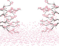 Niederlassungen einer blühenden rosa Kirsche auf beiden Seiten vom Bild Kirschblüte Die Blumenblätter fliegen in den Wind und lie Lizenzfreie Stockbilder
