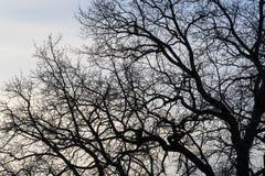 Niederlassungen eines Baums gegen Stockfotografie