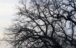 Niederlassungen eines Baums gegen Stockfotos