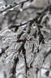Niederlassungen eines Baums im Eis Stockbild