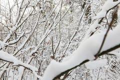 Niederlassungen eines Baums im Schnee Stockfotos