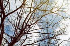 Niederlassungen eines Baums ohne Blätter Lizenzfreie Stockbilder