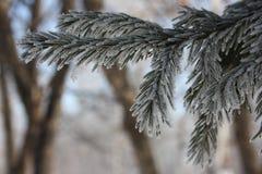 Niederlassungen eines Baums eines Weihnachten Lizenzfreies Stockfoto