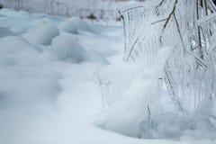 Niederlassungen eingefroren im Winter Lizenzfreies Stockfoto