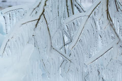 Niederlassungen eingefroren im Winter Lizenzfreie Stockfotografie