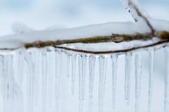 Niederlassungen eingefroren im Winter Stockfoto