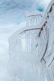 Niederlassungen eingefroren im Winter Stockbild