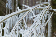 Niederlassungen eingefroren im Winter Lizenzfreies Stockbild