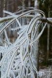 Niederlassungen eingefroren im Winter Stockfotografie