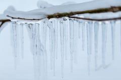 Niederlassungen eingefroren im Winter Lizenzfreie Stockfotos