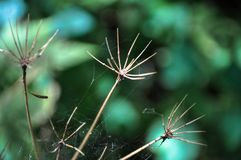 Niederlassungen formten wie die Hände, die mit Spinnennetzen im Wald umfasst wurden stockfotografie