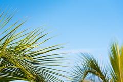 Niederlassungen gegen den blauen Himmel in Bayahibe, La Altagracia, Dominikanische Republik Kopieren Sie Raum für Text Lizenzfreie Stockfotos