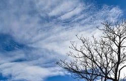 Niederlassungen im blauen Himmel Stockfotos