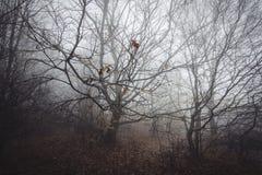 Niederlassungen im dichten Wald mit Nebel Stockfotografie