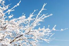 Niederlassungen im eisigen Winter schnee outdoor Lizenzfreie Stockfotos