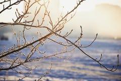 Niederlassungen im Frost an einem nebeligen Tag des kalten Winters, die Sonne versteckt durch Nebel Stockfoto