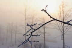 Niederlassungen im Frost an einem nebeligen Tag des kalten Winters, die Sonne versteckt durch Nebel Lizenzfreie Stockfotografie
