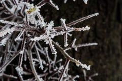 Niederlassungen im Frost im Winter Stockbild