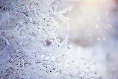 Niederlassungen im Reif und im Schnee stockfotos