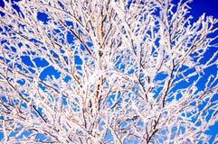 Niederlassungen im Schnee Stockfotos