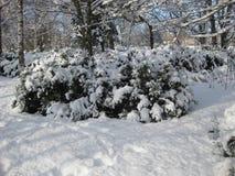 Niederlassungen im Schnee Lizenzfreie Stockfotografie