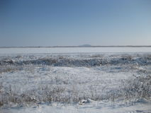 Niederlassungen im Schnee Stockfotografie