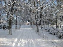 Niederlassungen im Schnee Stockbilder