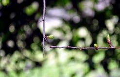 Niederlassungen im Wald Lizenzfreies Stockfoto