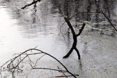 Niederlassungen im Wasser Lizenzfreie Stockbilder