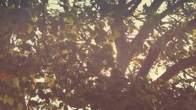 Niederlassungen im Wind mit Funkeln Sun-Aufflackern stock video