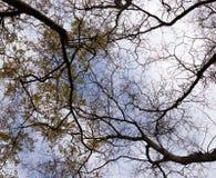 Niederlassungen mit Blättern und außen von Bäumen auf dem Hintergrund des Himmels lizenzfreie stockfotografie