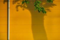 Niederlassungen mit Blättern und der Stamm können nur als Schatten auf der Fabrikhalle gesehen werden Lizenzfreie Stockbilder