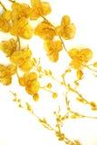 Niederlassungen mit Blumengoldfarbe Stockfoto