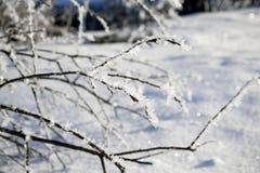 Niederlassungen mit Frost im Winter Lizenzfreies Stockbild