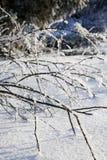 Niederlassungen mit Frost im Winter Stockbild