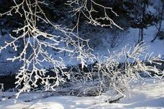 Niederlassungen mit Frost im Winter am sonnigen Tag Lizenzfreie Stockbilder