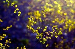 Niederlassungen mit jungen Blättern in einer purpurroten Farbe Lizenzfreie Stockfotos