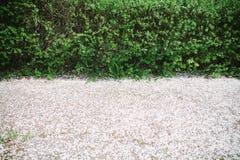 Niederlassungen mit jungen grünen Blättern und den weißen gefallenen Blumenblättern von Frühlingsblumen Ansicht von oben Raum für stockbilder