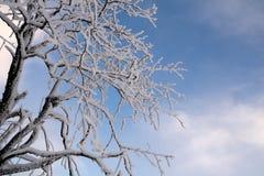 Niederlassungen mit Schnee und bewölktem Himmel Stockfoto